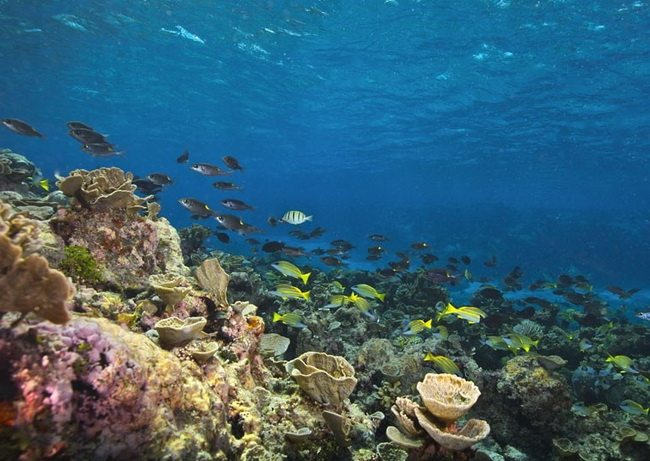 Liječenje osteohondroze koralnog kluba