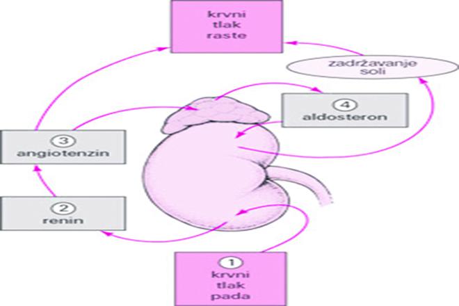 učinak hipertenzije začeća peršin liječenje hipertenzije