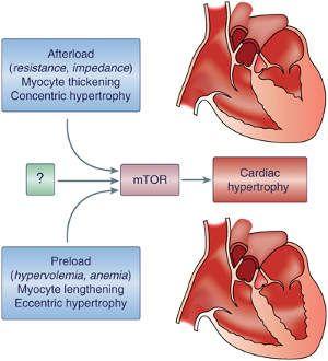 iz srca i hipertenzije vodikov peroksid hipertenzija piće
