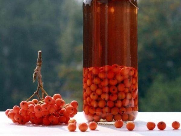 ljekovitost planina pepela hipertenzije mogu li uzeti vitamine za hipertenziju