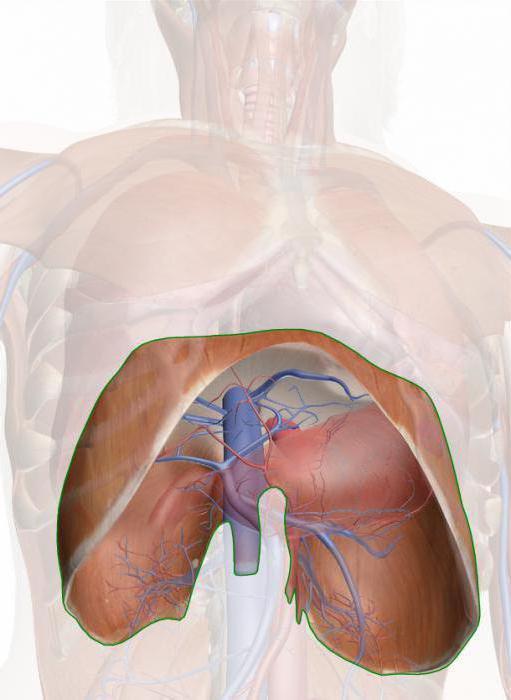 dijafragmatička hipertenzija disanje hipertenzija, žučni mjehur dijeta