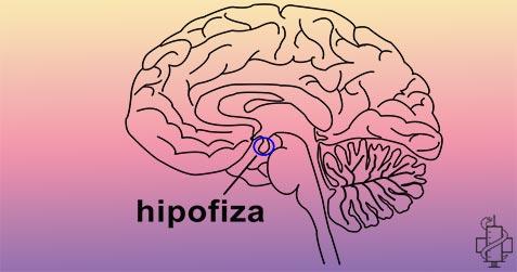 način života i prehrana u hipertenzije uzroci hipertenzije i kako popraviti videa