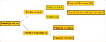 hipertenzija ubrzo ljekovitost morskog trna za hipertenziju