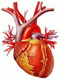 primjeri na hipertenziju