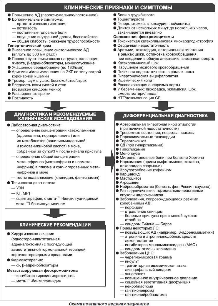 patogenezi hipertenzije u feokromocitoma