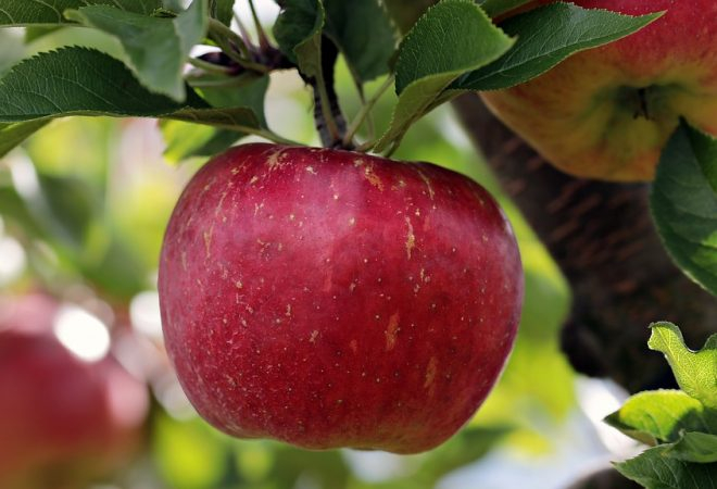 hipertenzije i jabuke